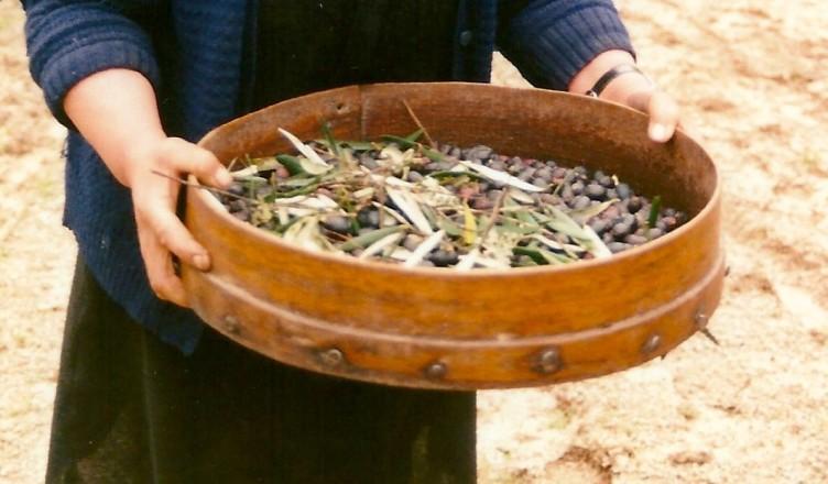 Imed. Mirandela, 1996